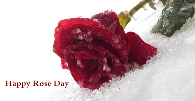 Happy Rose Day HD Images Wishes
