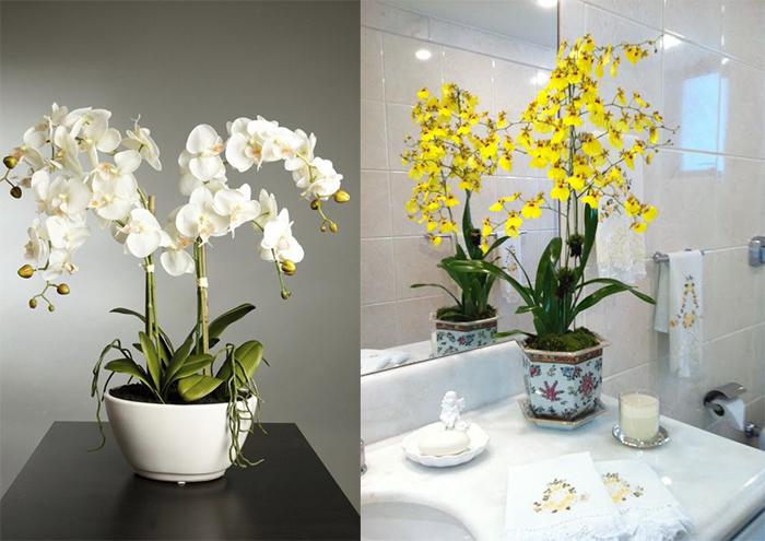 Plantas para decorar seu banheiro!  Abrir Janela -> Banheiro Decorado Com Planta Artificial