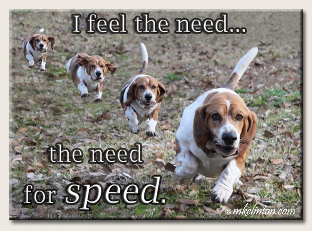 "Basset Hound with ""need for speed."" quote"