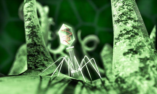 bentuk 3D virus T