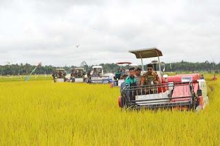 Pemanenan padi modern