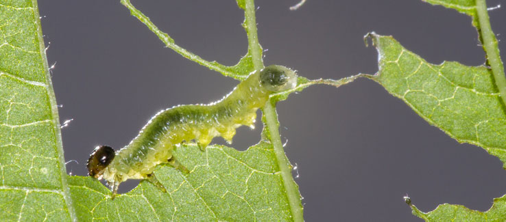 Tree insect infestations in Atlanta Ga