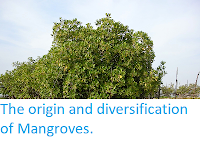 http://sciencythoughts.blogspot.co.uk/2014/05/the-origin-and-diversification-of.html