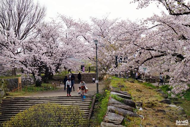 舞鶴公園の桜、福岡