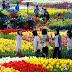 Khám phá những cánh đồng hoa đẹp ấn tượng tại Hàn Quốc