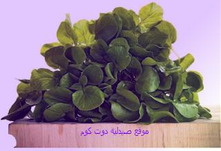 الجرجير : تعرف على كل الفوائد الصحية للجرجير المعجزة الخضراء