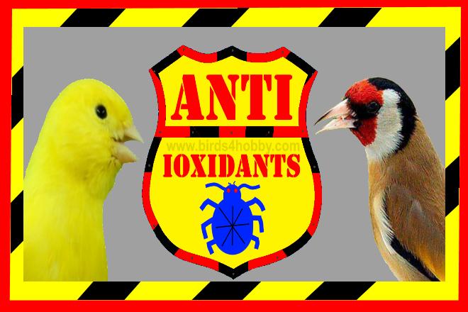 فائدة مضادات الاكسدة على صحة الطيور