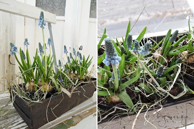 Blumen Schicken Trier