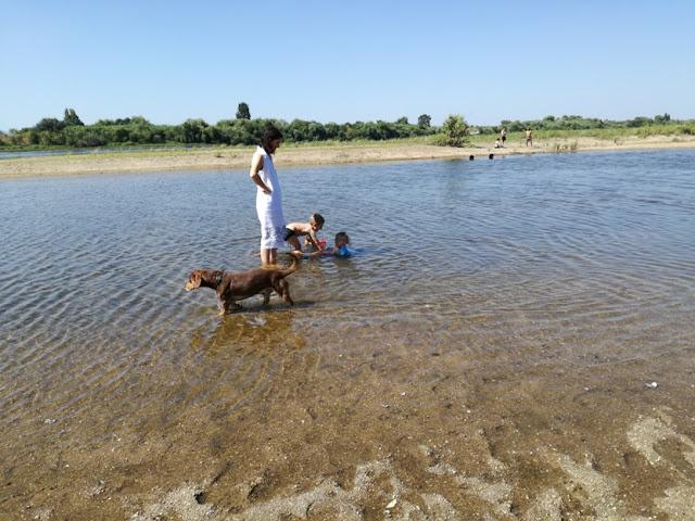 Crianças e cães na Praia da Chamusca