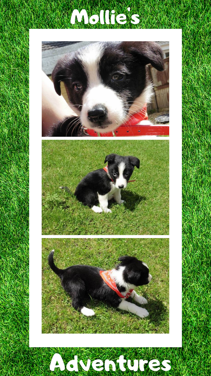Mollie The Collie: Puppy Diaries