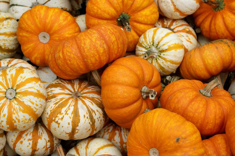 SoFabSeasons - Pumpkins