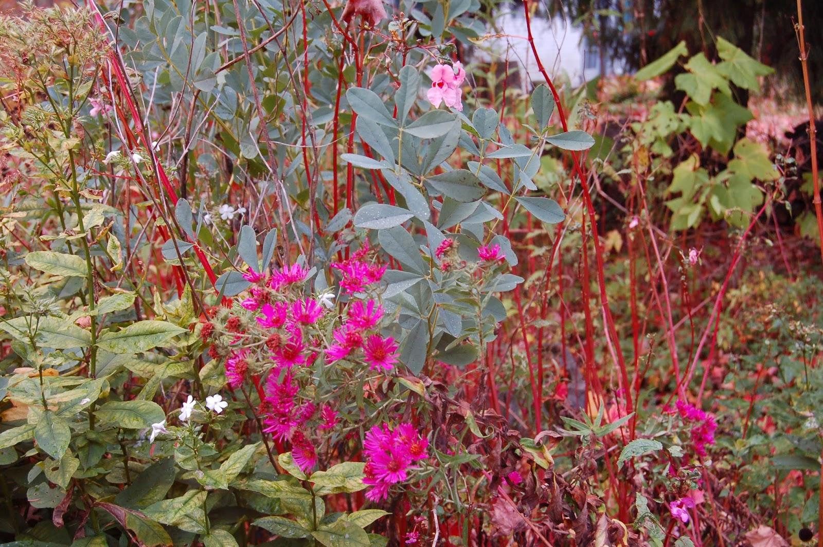 delightful quoi planter en novembre 3 fleurs planter des bulbes de printemps en automne. Black Bedroom Furniture Sets. Home Design Ideas