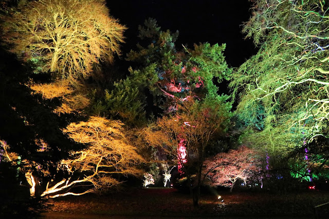 Trees lit up in lots of pretty colours