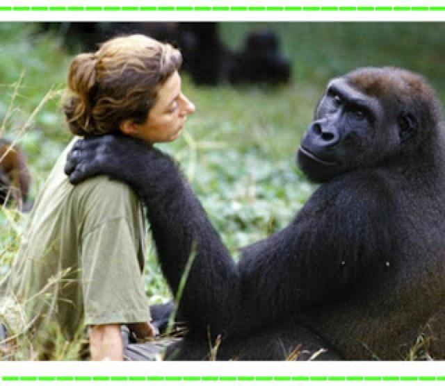 Vampiro Erudito: Gorila