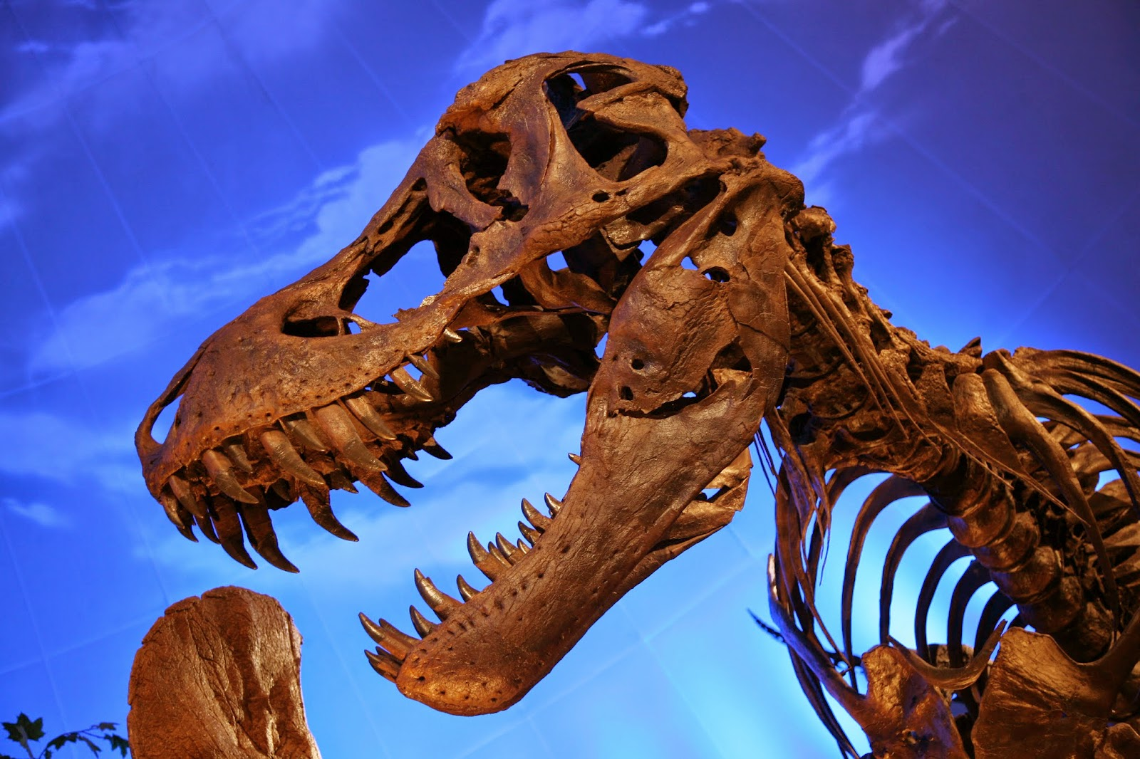 Makhluk Purba yang Paling Ganas,t-rex,fosil,dinosaurus