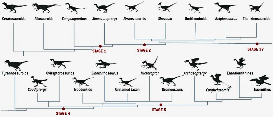Pterosaurs to Birds: Dinosaurs did not have feathers