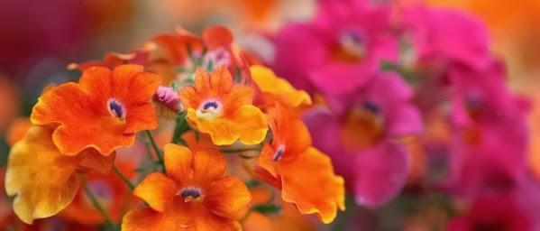Flower Facebook cover