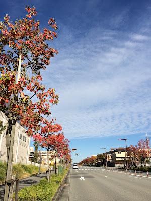 イメージ画像:秋の道