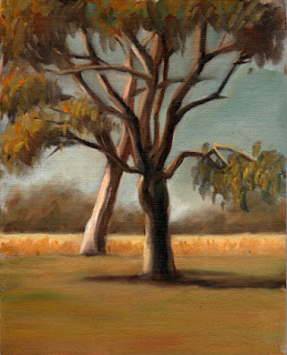 Oil painting of two lemon-scented gums with dry grass and eucalypts in the background.