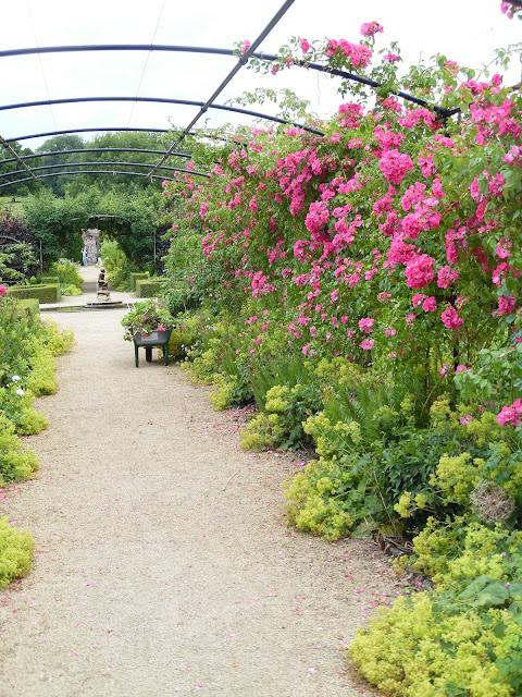 pergola z różami, oś widokowa w ogrodzie