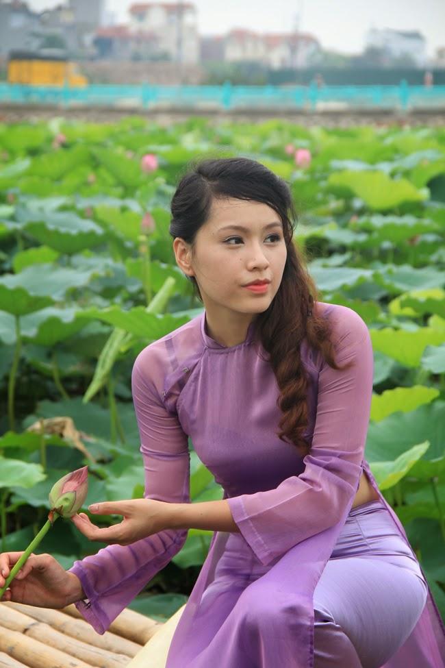 Hoa sen Ho Tay 2014