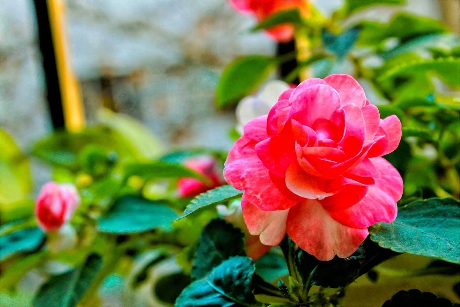 Flor de alegría del hogar