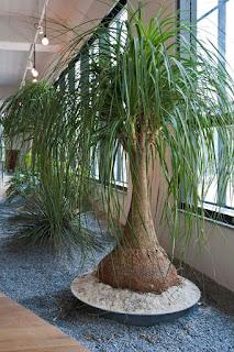 Rodeate de plantas en tu hogar
