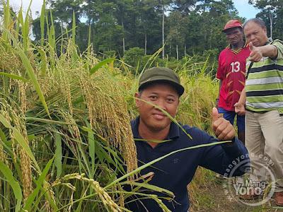 Prof. Ali Zum Mashar... Padi Trisakti dg Migo yang ditanam Orang Papua Asli