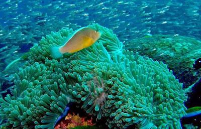 Terumbu karang bawah laut Gili Trawangan