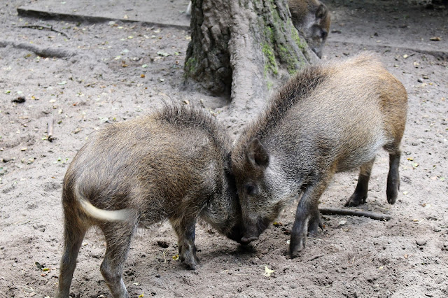 Erfahrung Tierpark Kunsterspring bei Neuruppin