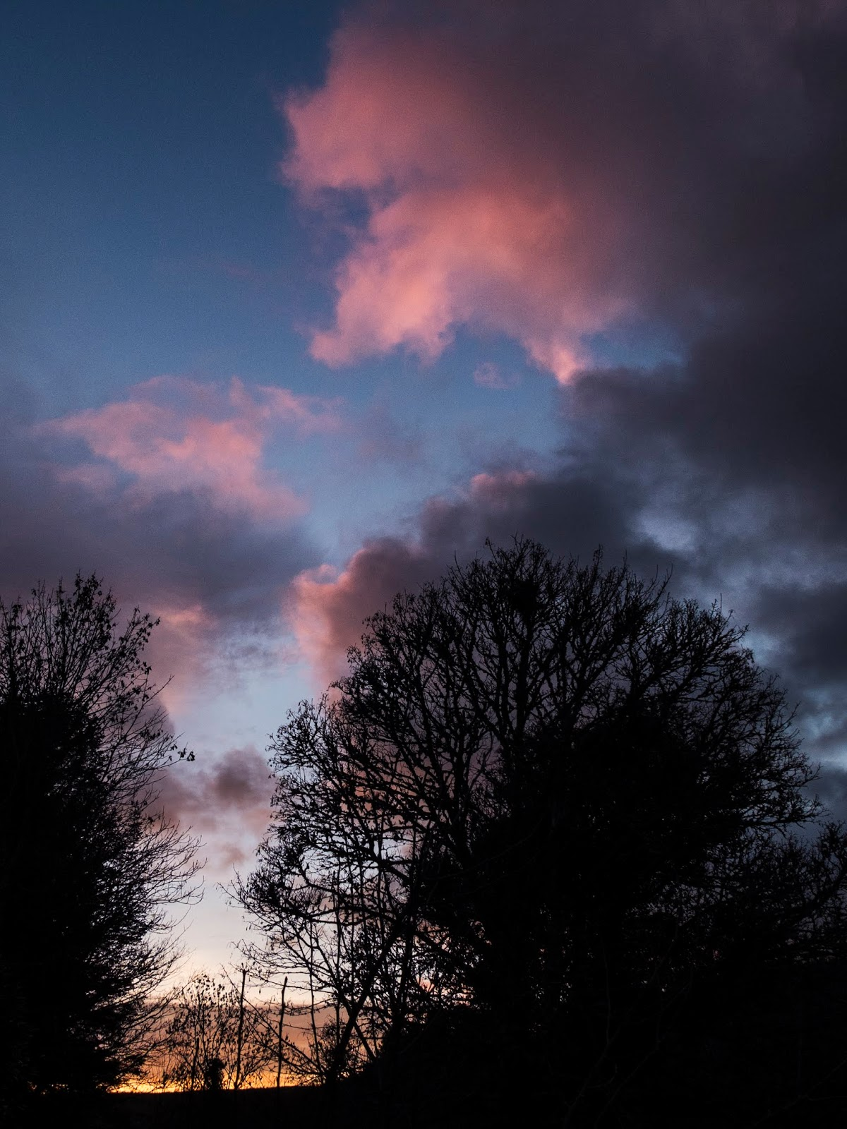 Mature and bare trees at sunset with light pink clouds overhead.