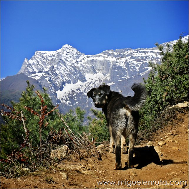 Trek-Campo-Base-Everest-Namche-Bazaar-Tengboche_2