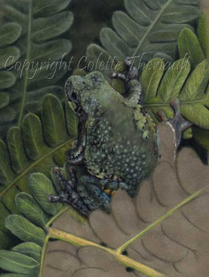 frog painting in pastel by Ontario wildlife artist Colette Theriault