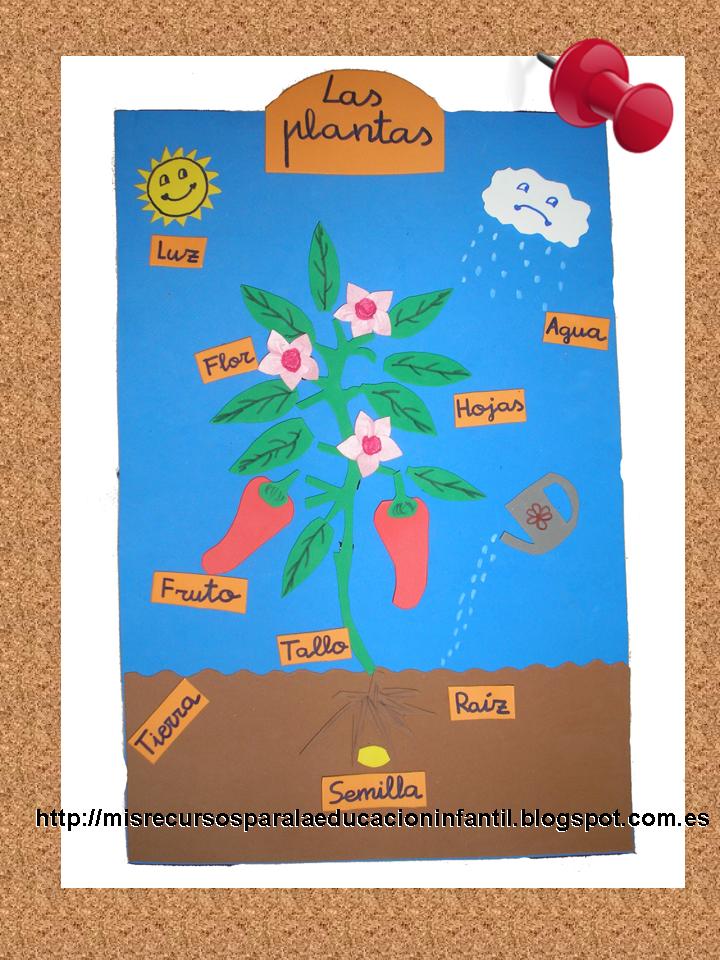 Play learn las partes de una planta - Cosas sobre las plantas ...