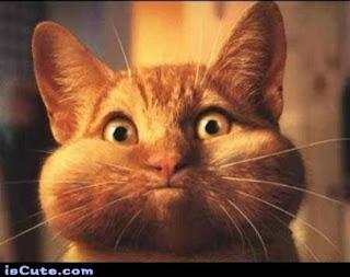 http://frabz.com/meme-generator/poster/493655-Kitty-Holding-its-Breath/