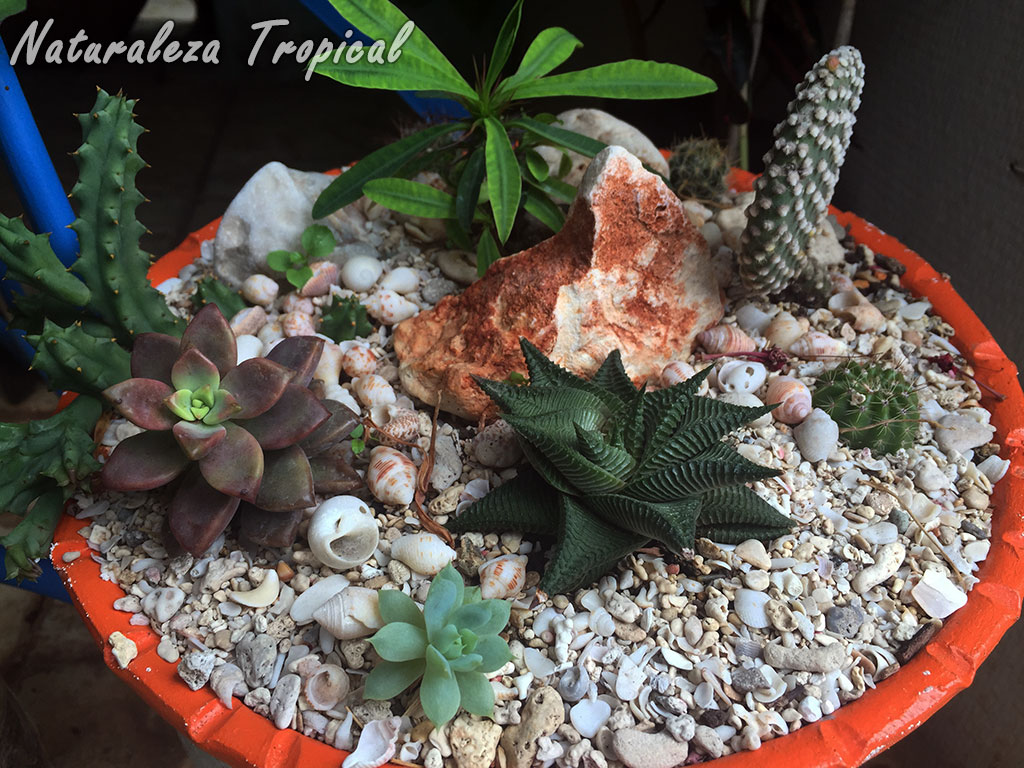 Naturaleza tropical galer a de arreglos con plantas for Arreglos de jardines con macetas