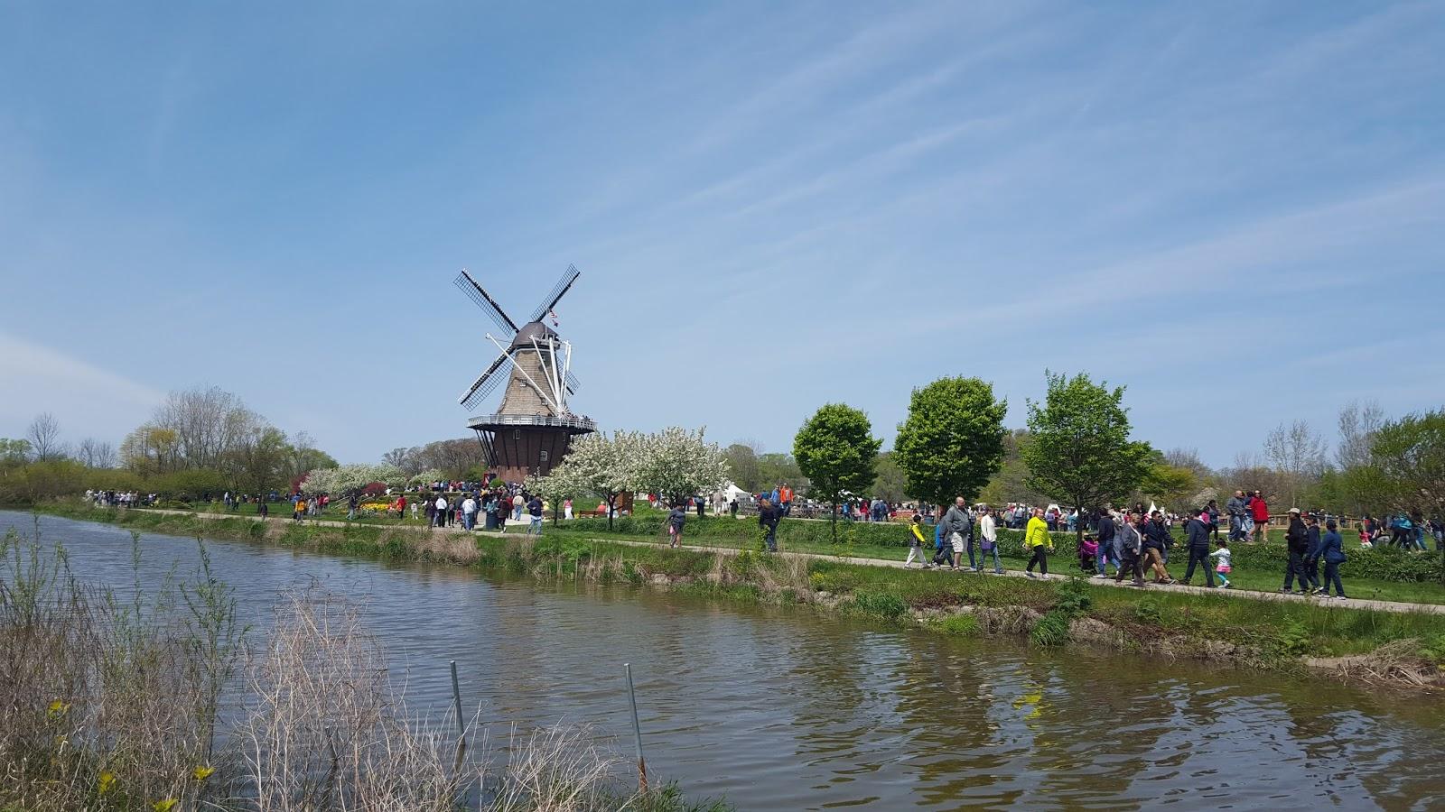 Holenderski duch w Ameryce, czyli o Festiwalu Tulipanów