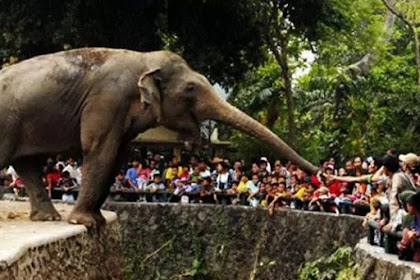 Harga Tiket Masuk Kebun Binatang Surabaya Terbaru Januari 2019