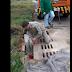 Corpo de Bombeiros de Laranjeiras resgatam cadela com filhotes em bueiro