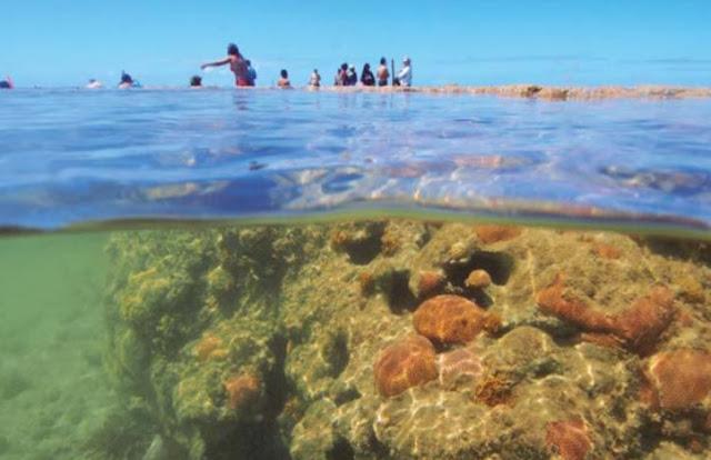 Coral Vivo promove ações para combate ao lixo marinho no Mês do Meio Ambiente
