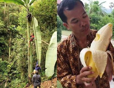 Keajaiban Tanah Papua Kita! Inilah Buah Eksotis yang Hanya Bisa Dijumpai di Sana