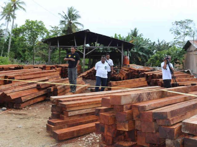 Dinas Kehutanan Papua Prihatin Banyak Temuan Kayu Hasil Illegal Logging