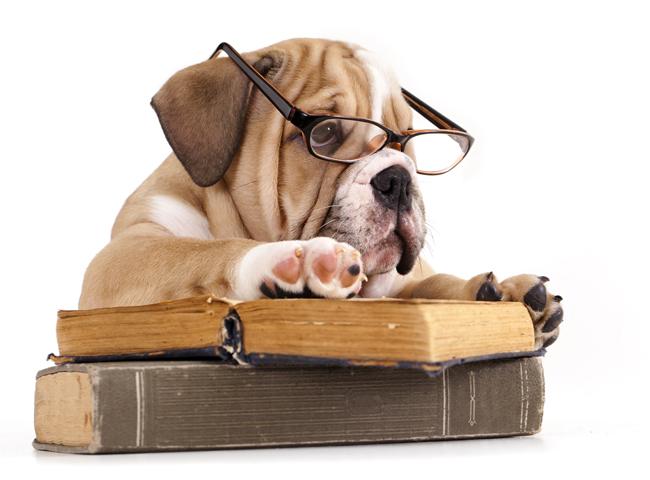 Jak wiele rozumieją psy?