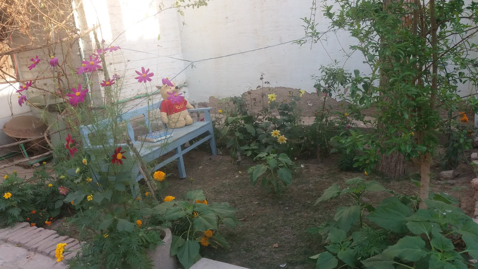 My little garden