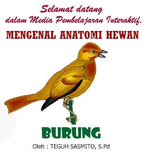 Mengenal Anatomi Hewan Burung (Ilmu Pengetahuan Alam)