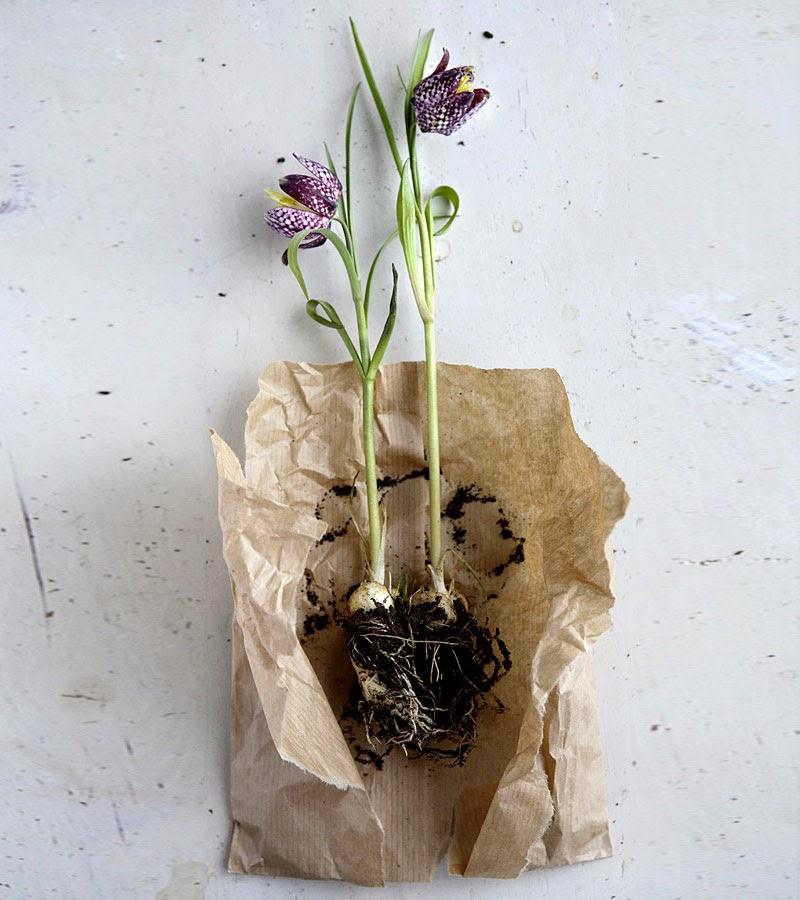 Maria victrix ideas de c mo hacer ramos de flores - Como hacer ramos de flores ...
