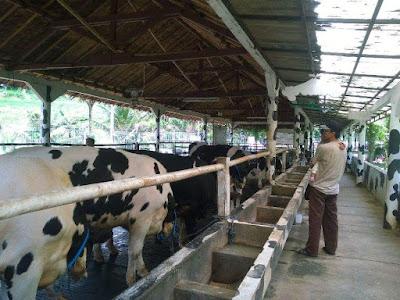Wisata keluarga Cimory on the valley Semarang