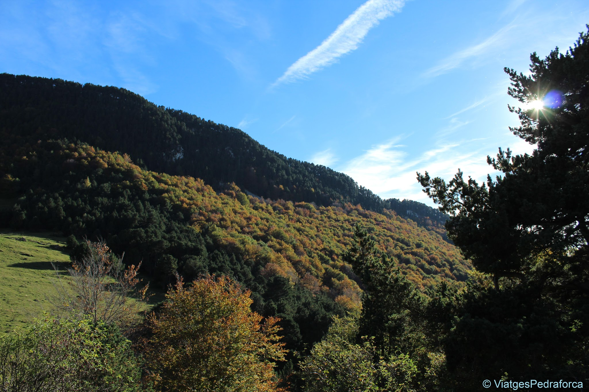 Fageda de Sant Amand, tardor, Bruguera, Vall de Ribès, Ripollès, Pirineus de Girona, Catalunya