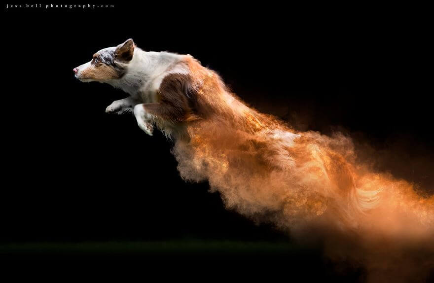 Photographer Tossed Powder On Running Dogs And Created Masterpieces