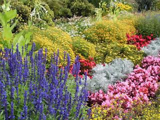 kwiaty, warzywa_